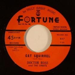 Cat Squirrel /The Sunnyland